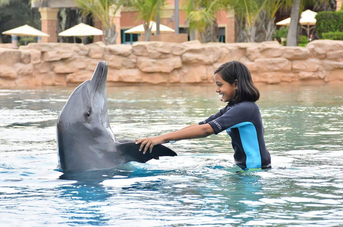 Программа «Знакомство с дельфинами»