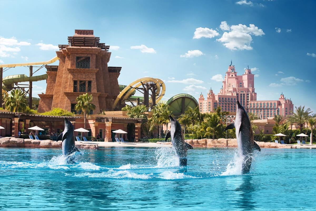 «Залив Дельфинов» в аквапарке Aquaventure