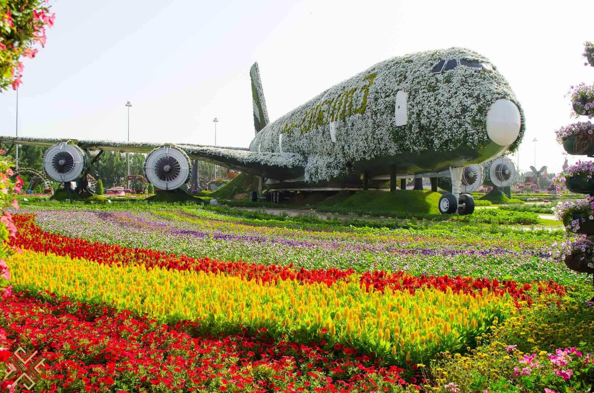 Цветы в форме самолёт