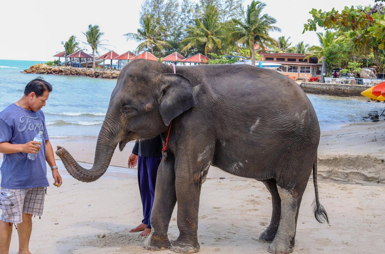 Сюда водят купаться слонов
