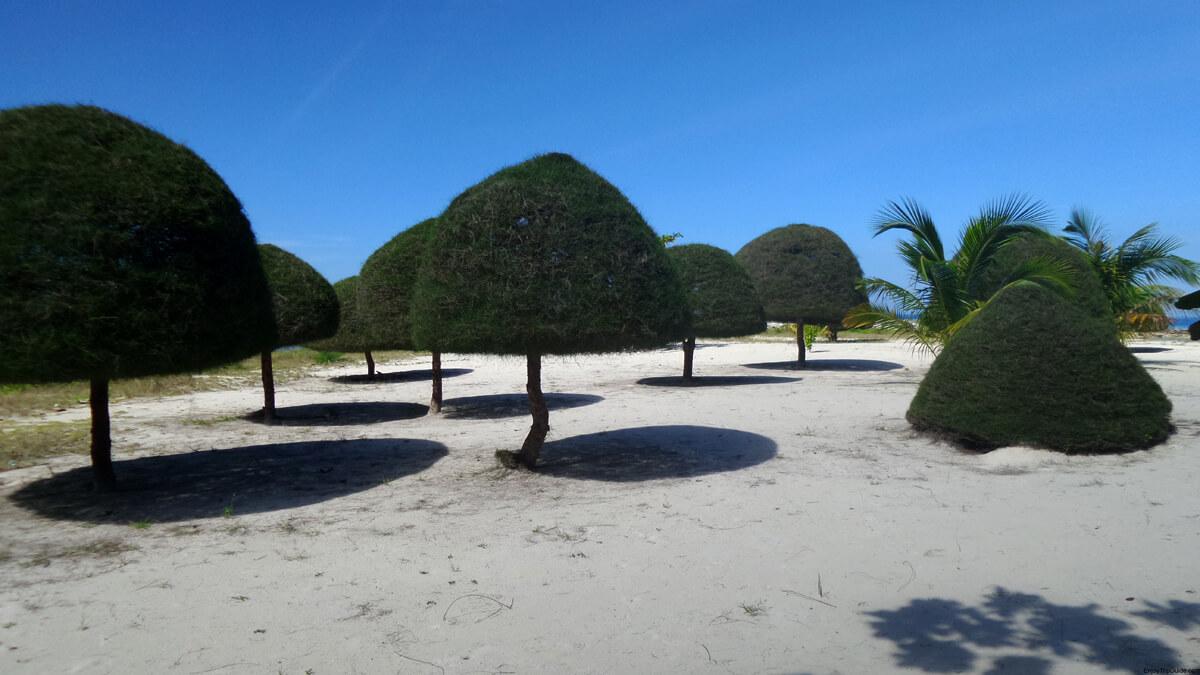 На берегу много ухоженной, подстриженной растительности
