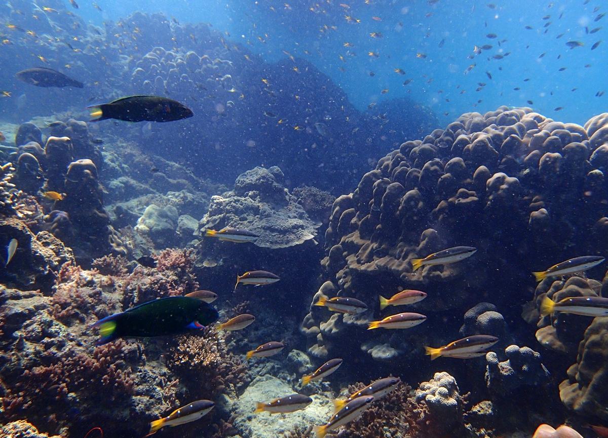 Подводные обитатели рифа на острове Бамбу