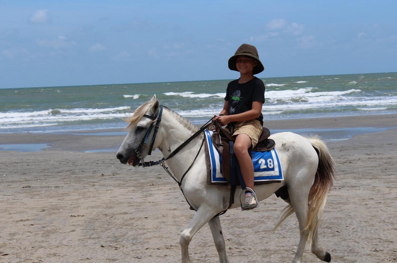 Доступны прогулки на лошадях