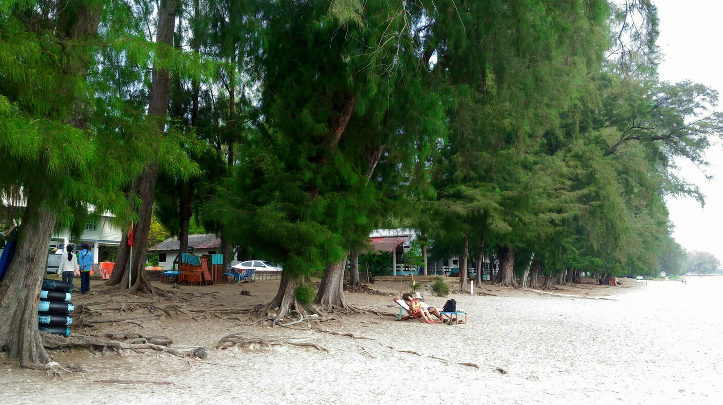Саун Сон называют ещё сосновым пляжем