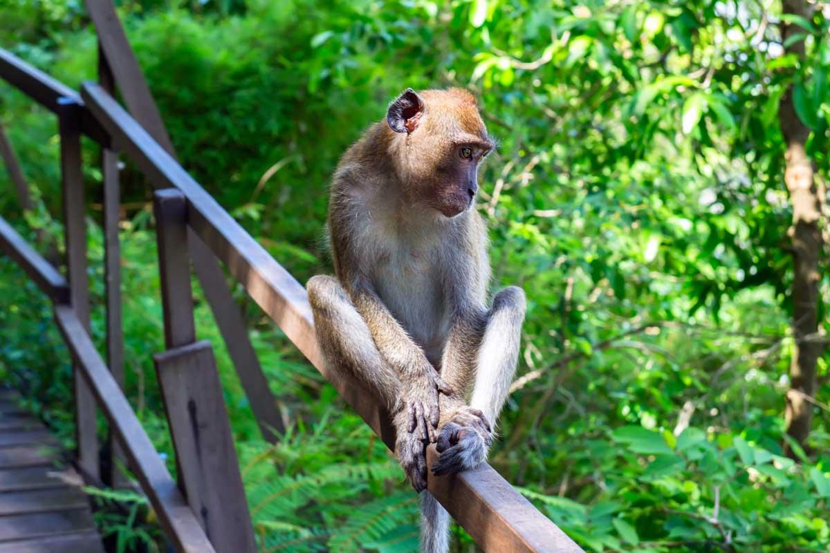 Экскурсия в джунгли с обитающими там макаками