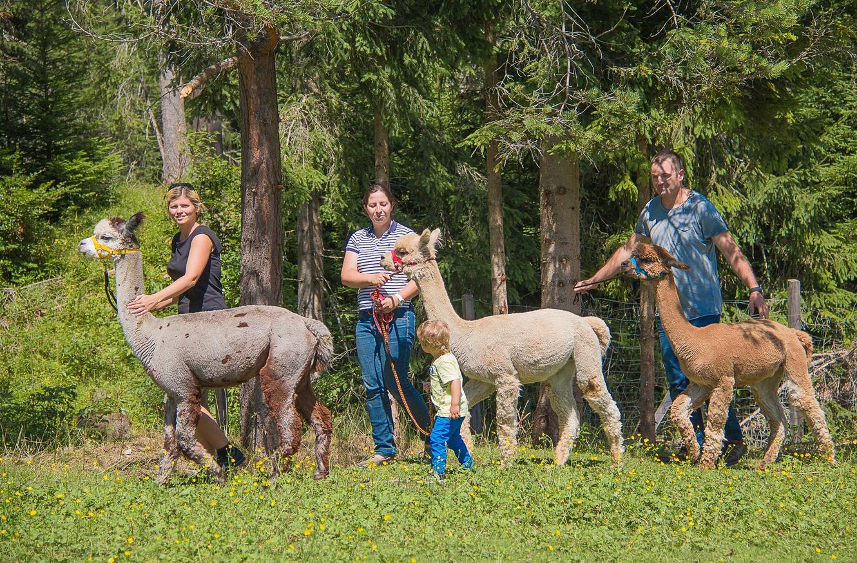 Экскурсия на ферму по разведению альпак