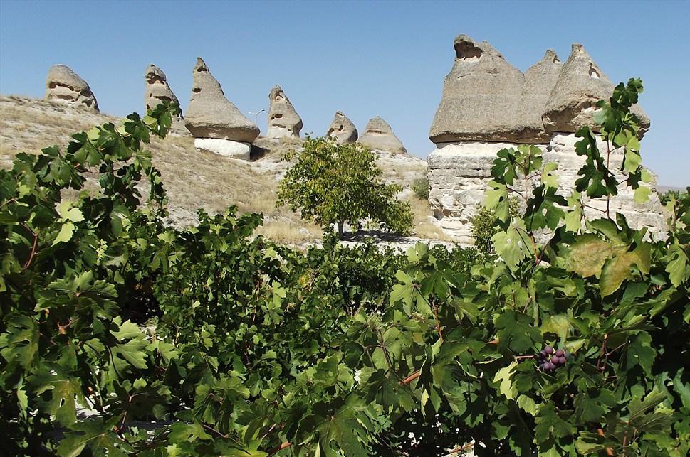 Виноградник в Каппадокии
