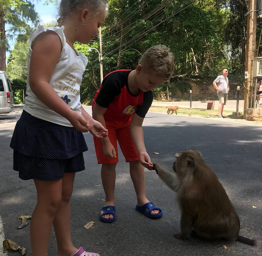 Дети кормят обезьяну