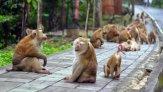 Гора обезьян на Пхукете – место встречи туристов с макаками