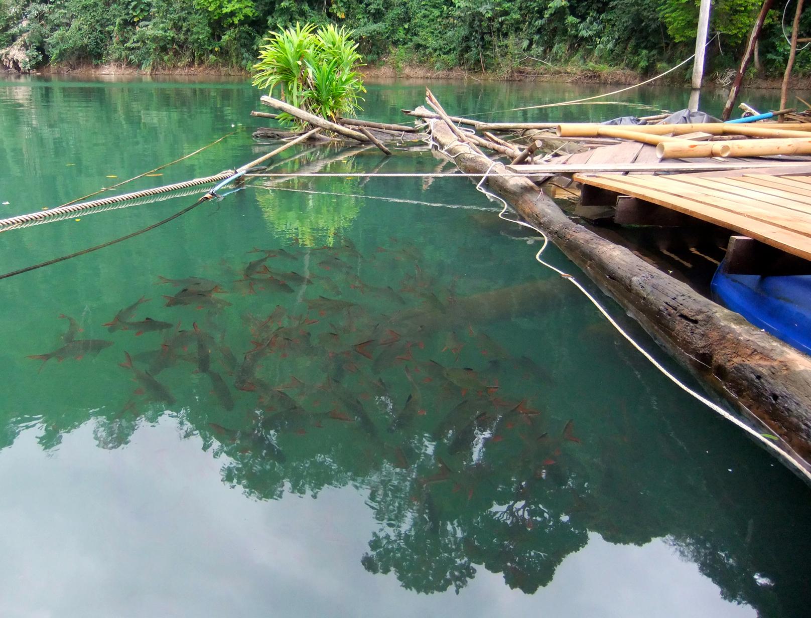 Рыба плавает в озере