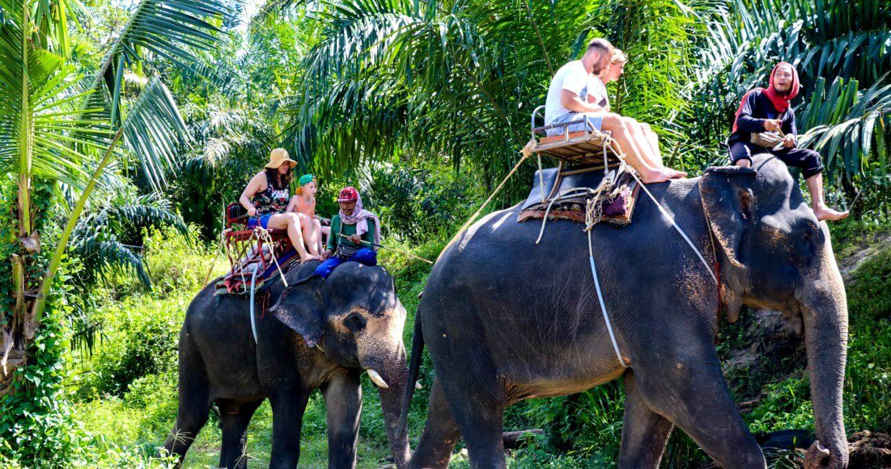 Прогулки на слонах