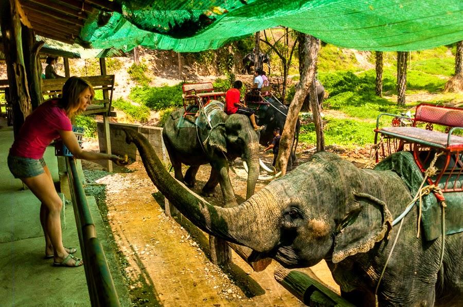 Слоны в парке