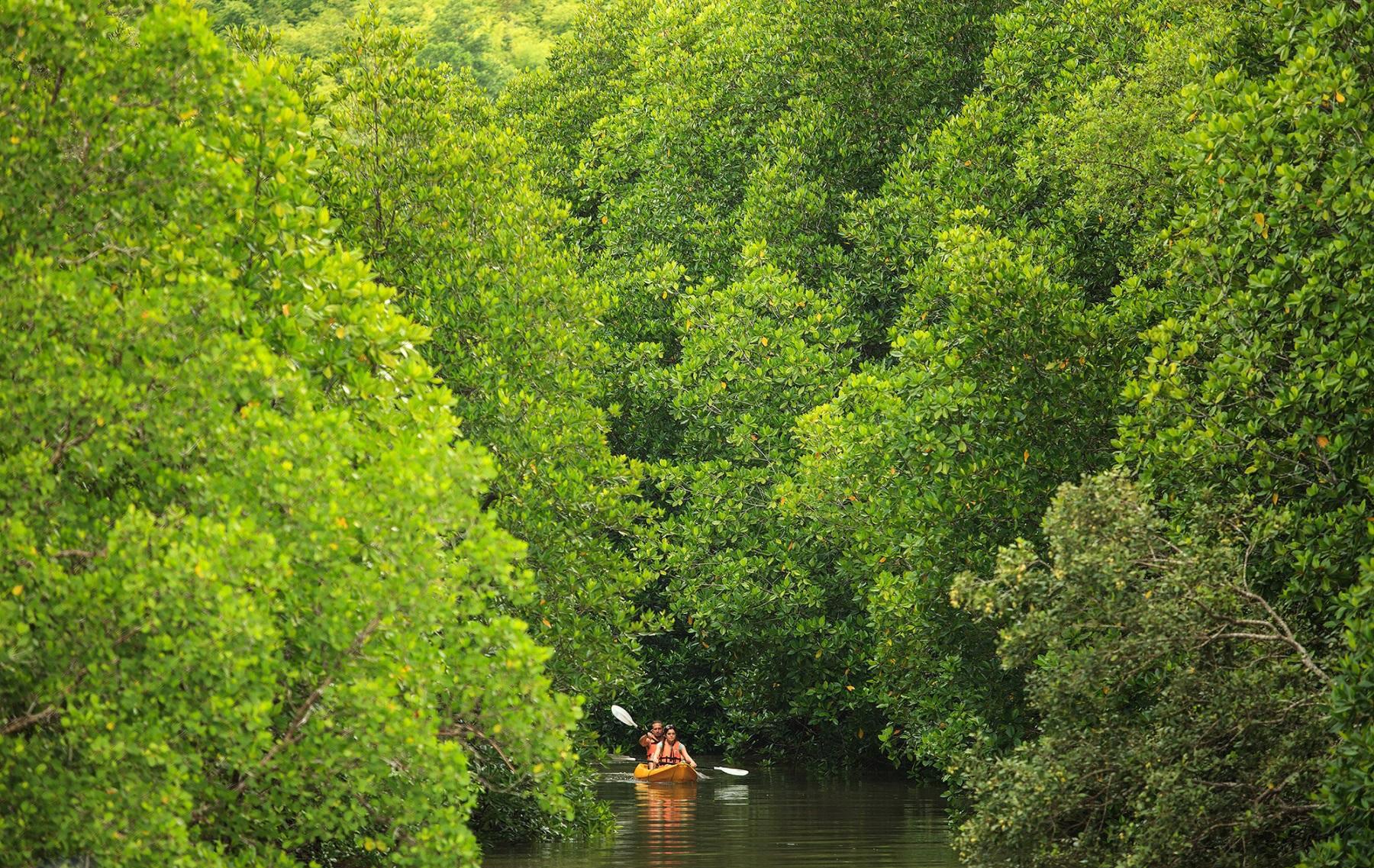 Плавание на каноэ