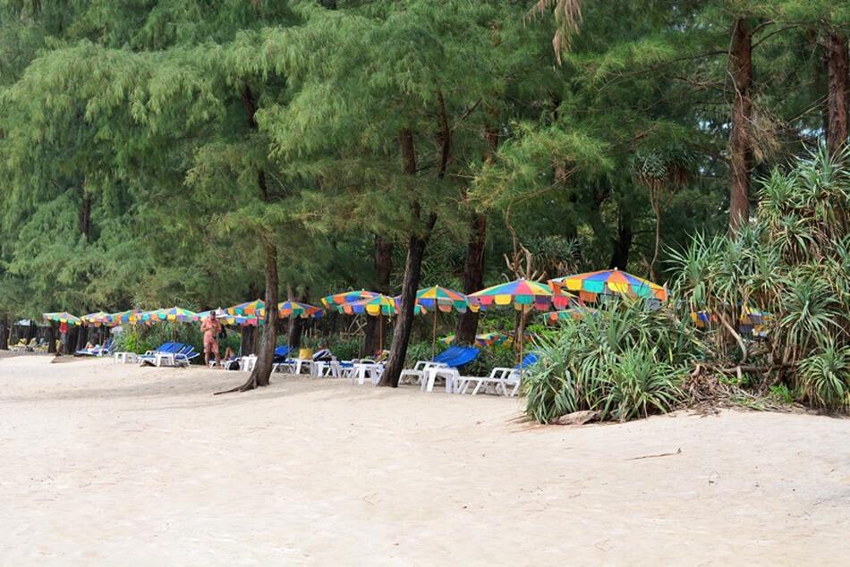Вдоль Банг Тао бич много растений