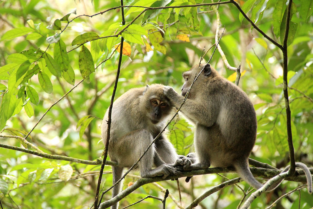 Сценки из жизни обезьян