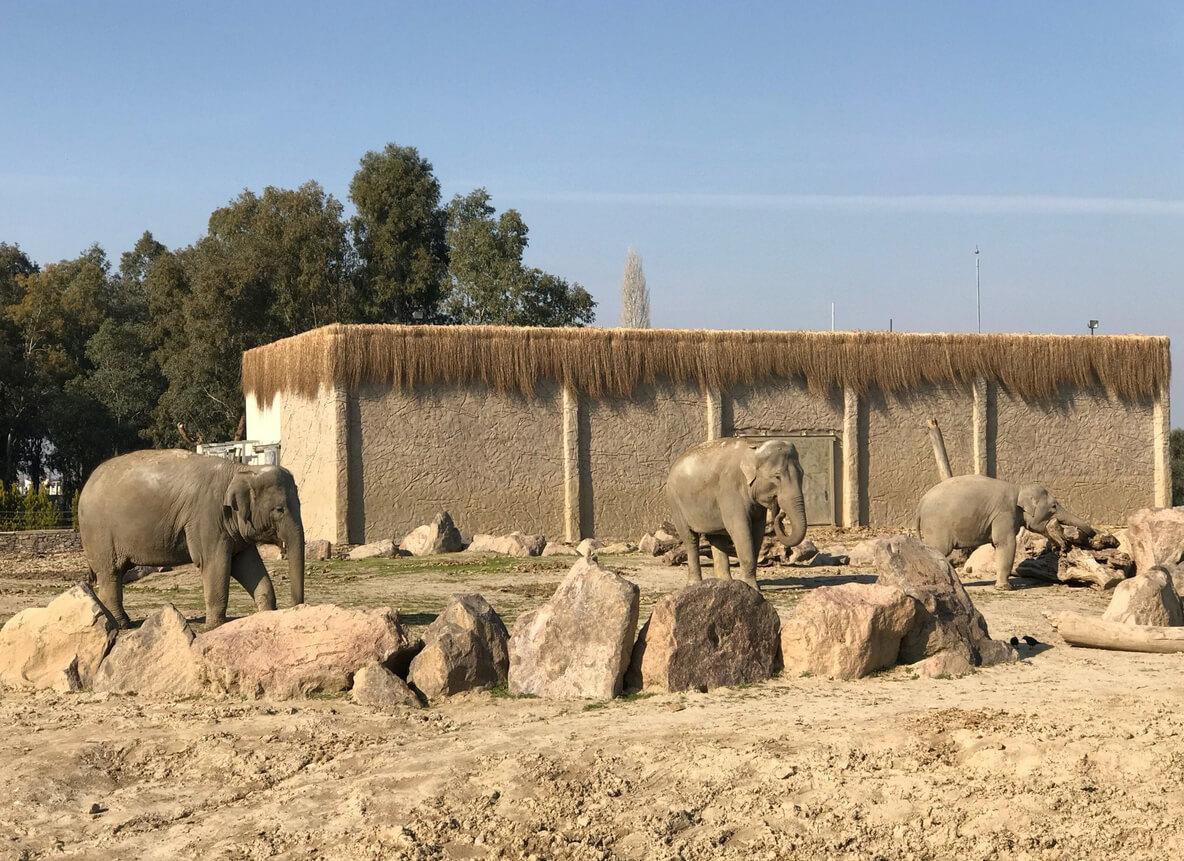 Слоны в зоопарке Измира