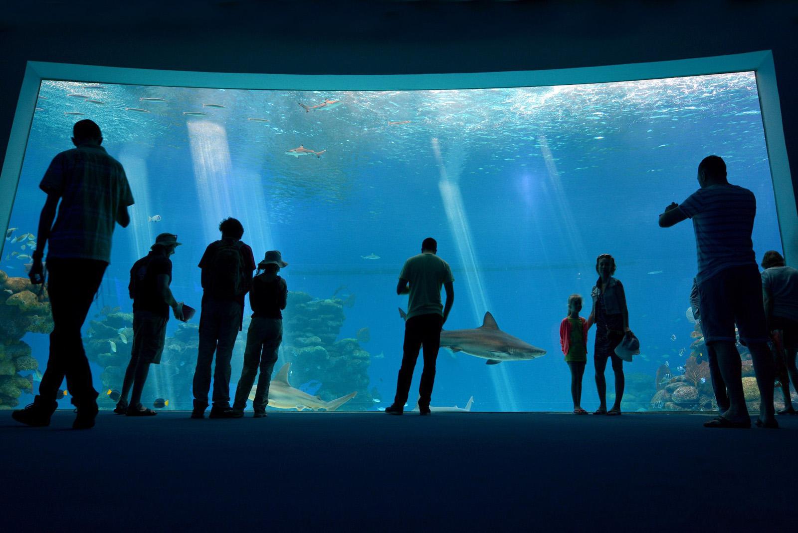 Аквариум в парке «Подводная обсерватория»