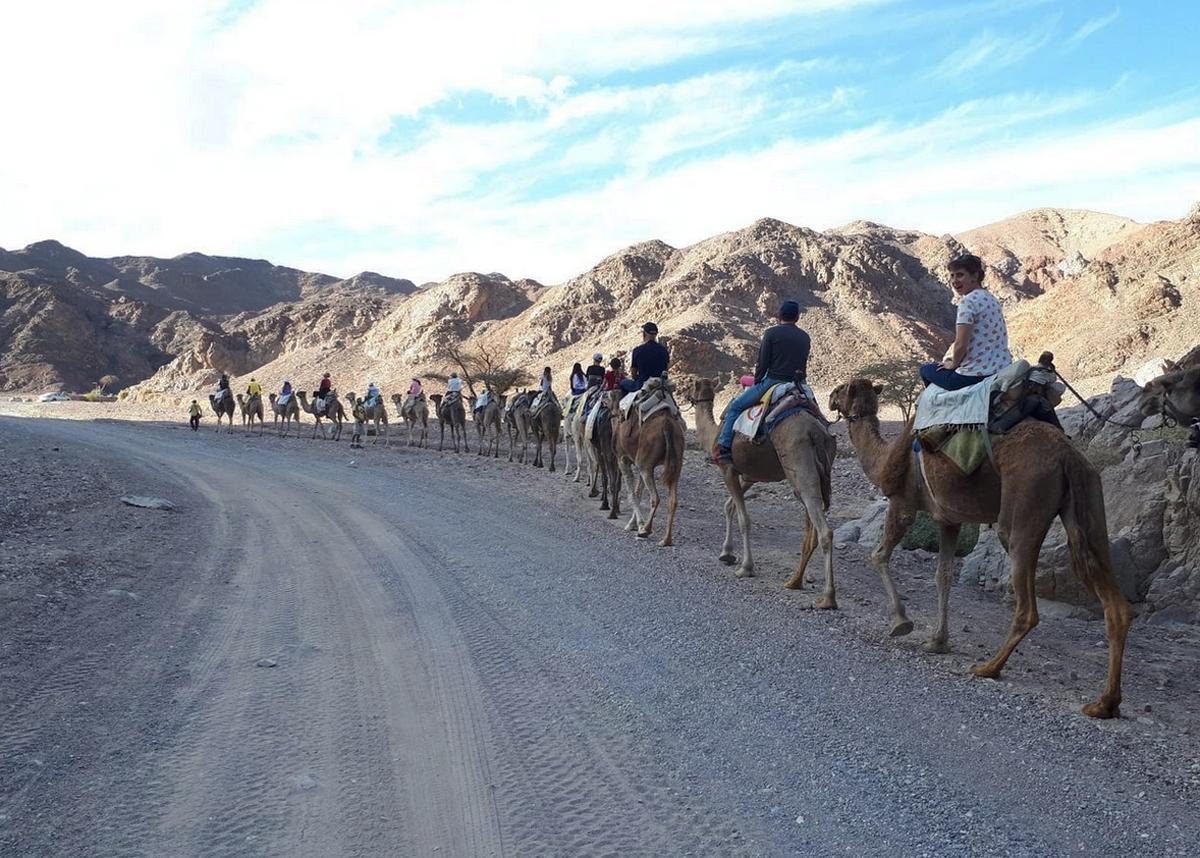 Катание на верблюдах