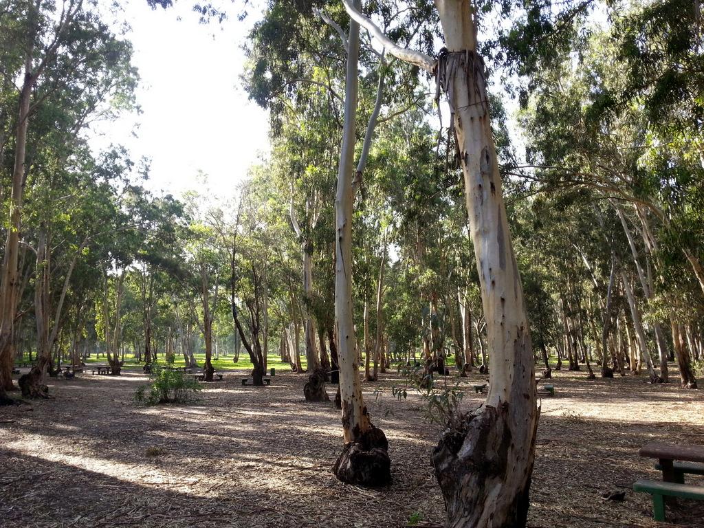 Лес Хадеры