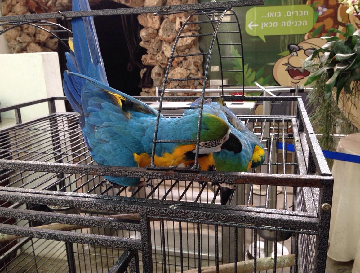 В зоопарке живут ручные попугаи