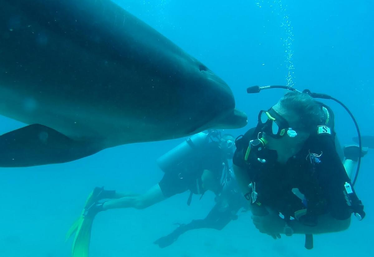 Дайвинг в Dolphin Reef