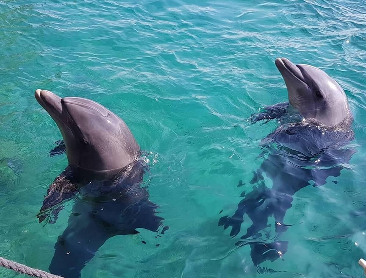 Дельфины в Dolphin Reef