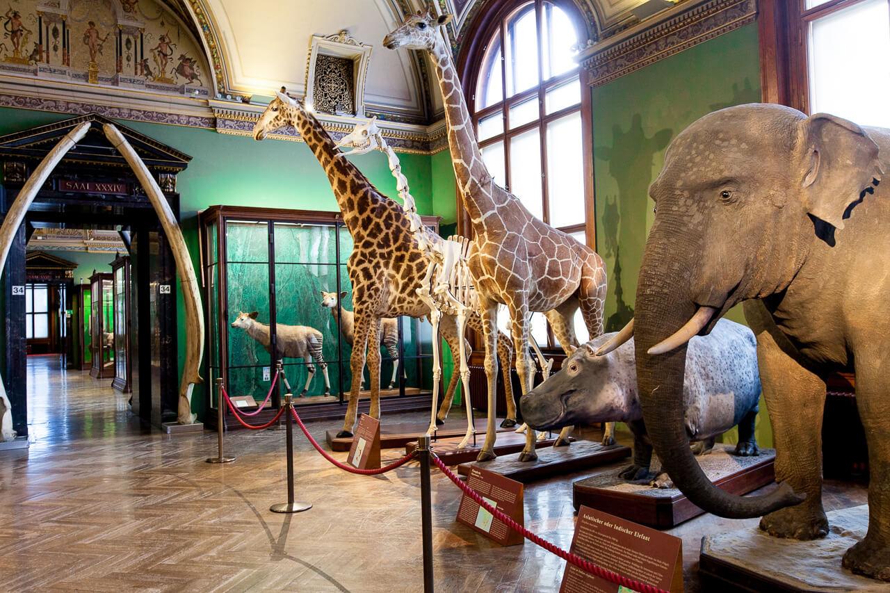 В музее природной истории