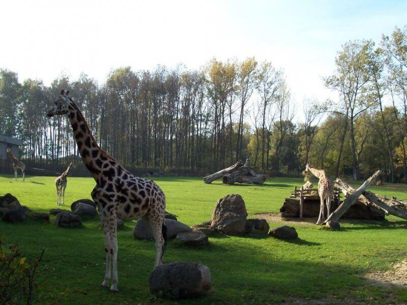 Животные в зоопарке Остравы