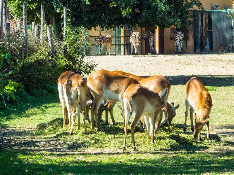 Зоопарк в Пльзене