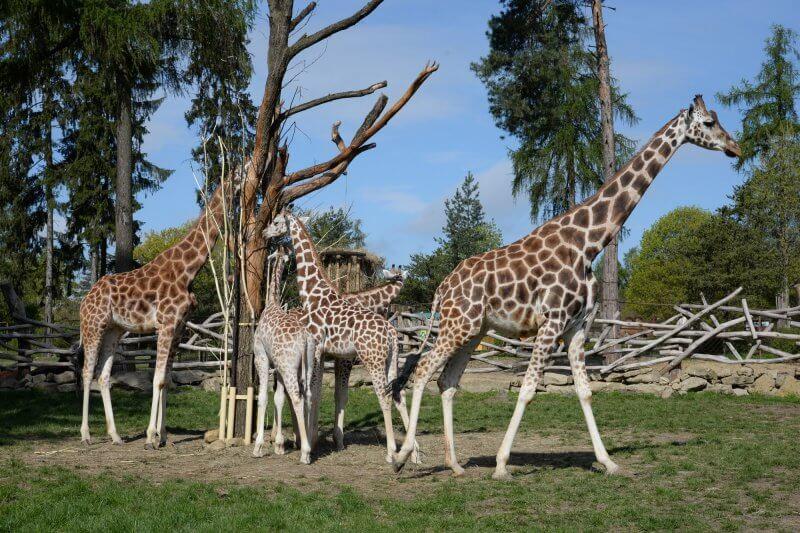 Зоопарк в Оломоуце