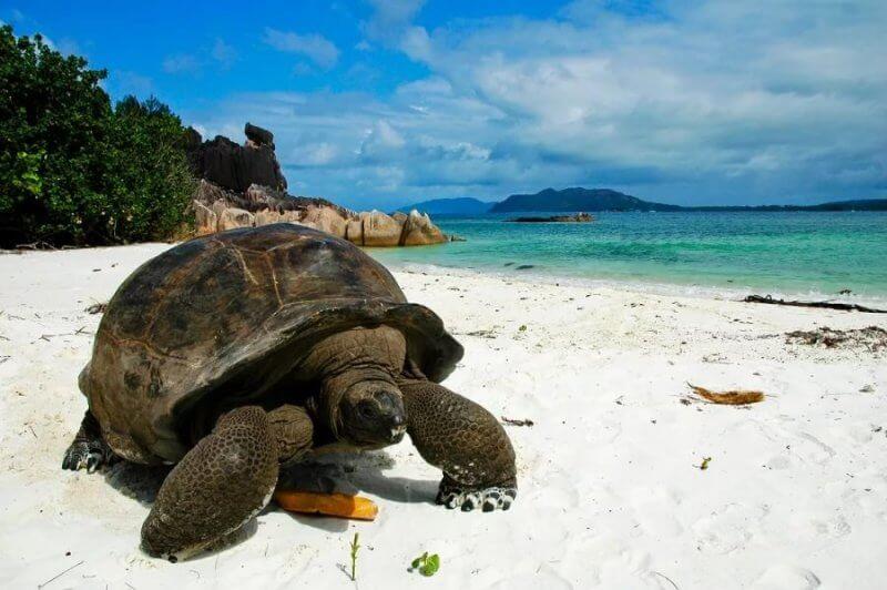 Черепаха на острове Хуонг