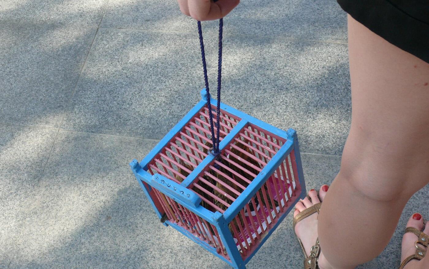 За 100 бат предлагают выпустить птиц из клеток