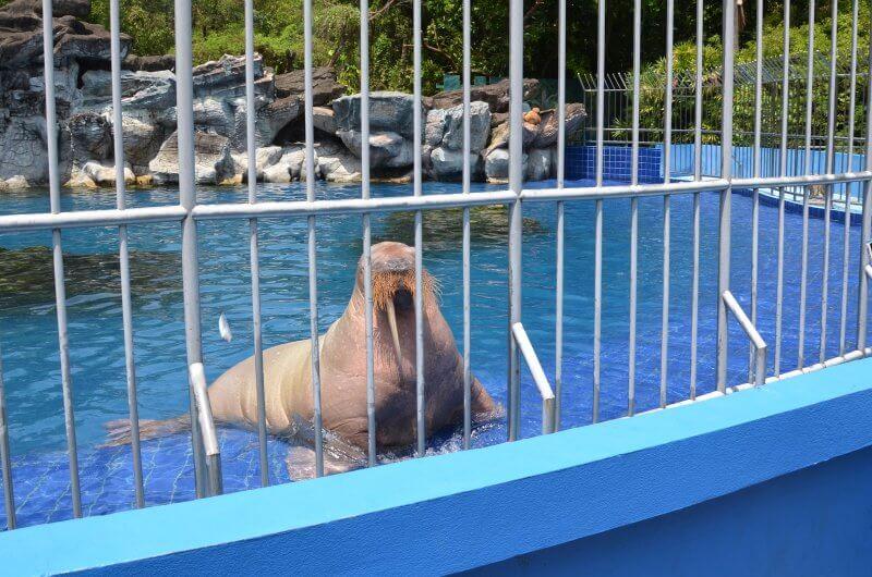 Морской котик в сафари парке