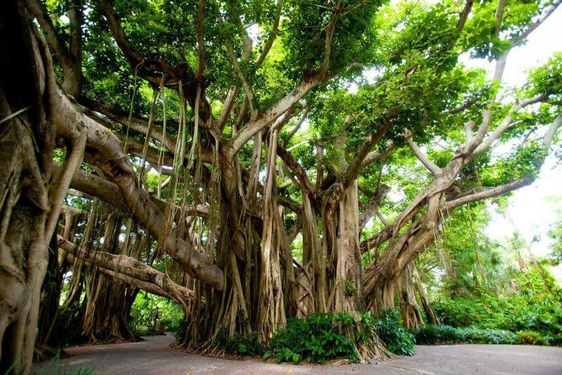 Леса в тайском парке