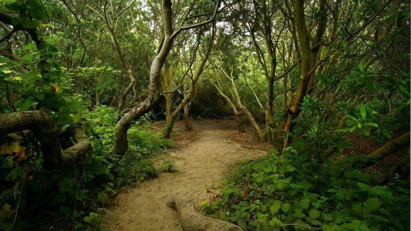 Дорога в парке Эраван