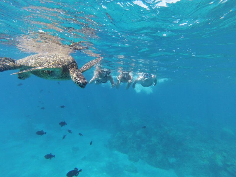 Черепахи около острова Хуонг
