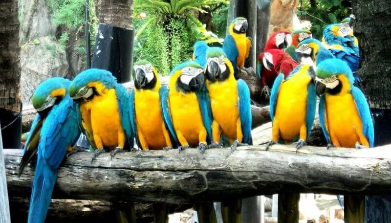 Попугаи в сафари парке