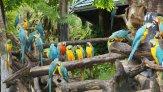 Сафари парк в Бангкоке: подробное описание с фото