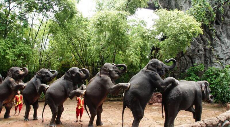 Слоны в сафари парке