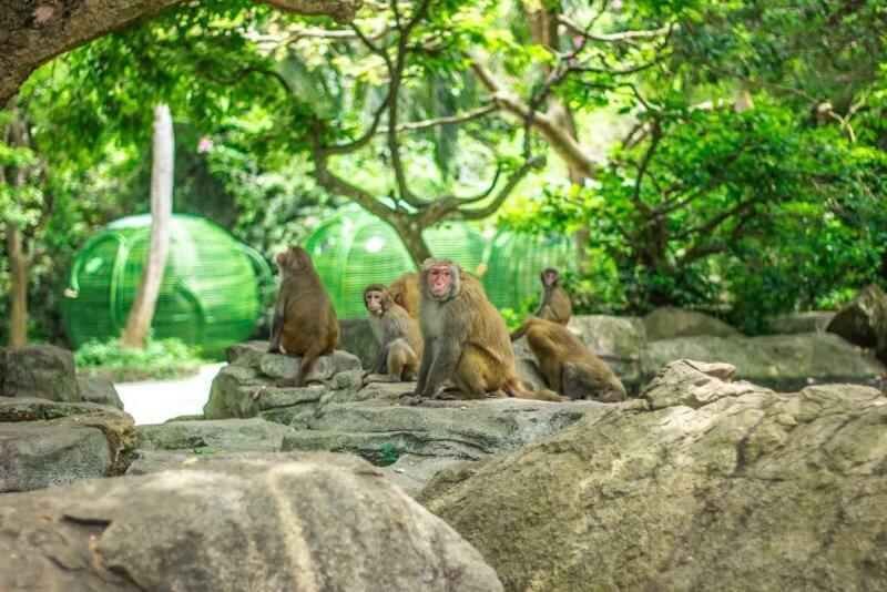 Обезьяны в парке Эраван