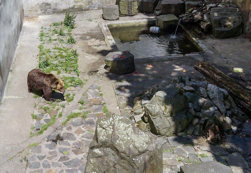 Ров с медведями