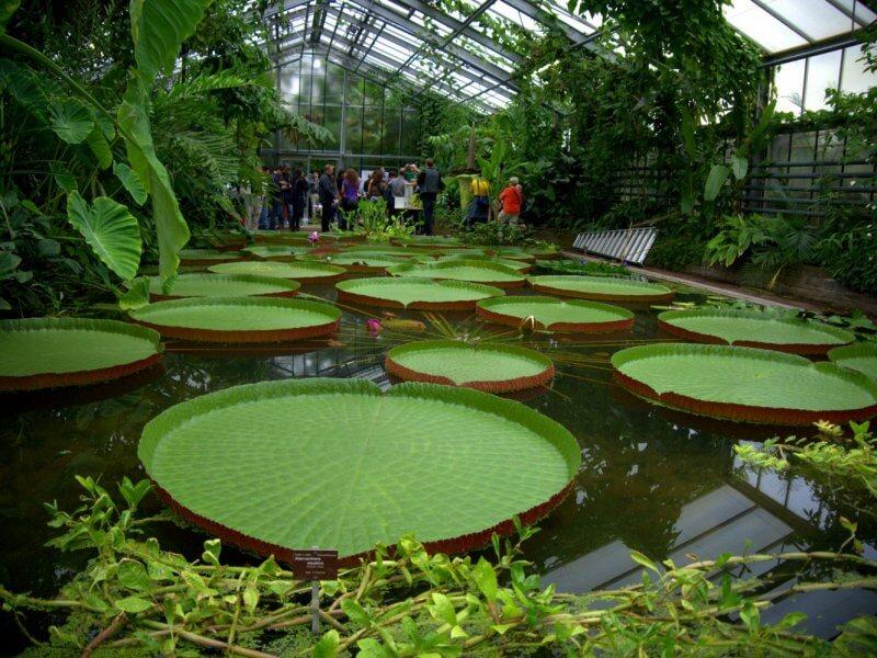 Павильон ботанического сада