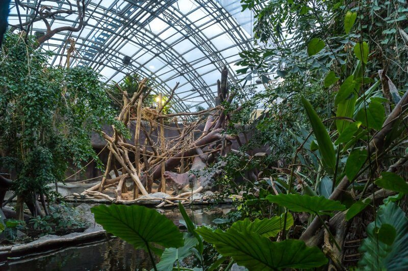 Джунгли Индонезии