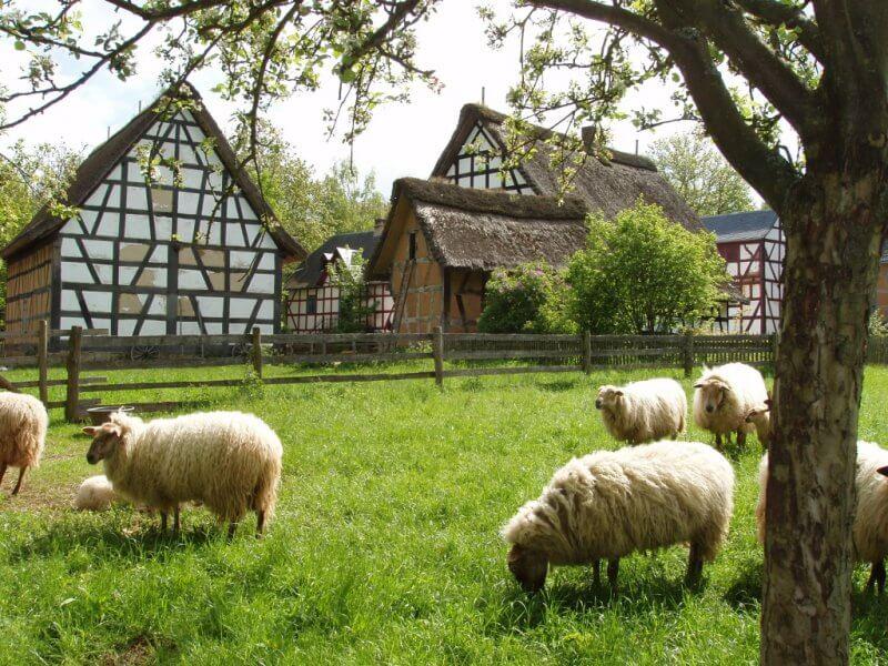 Овцы в Трире