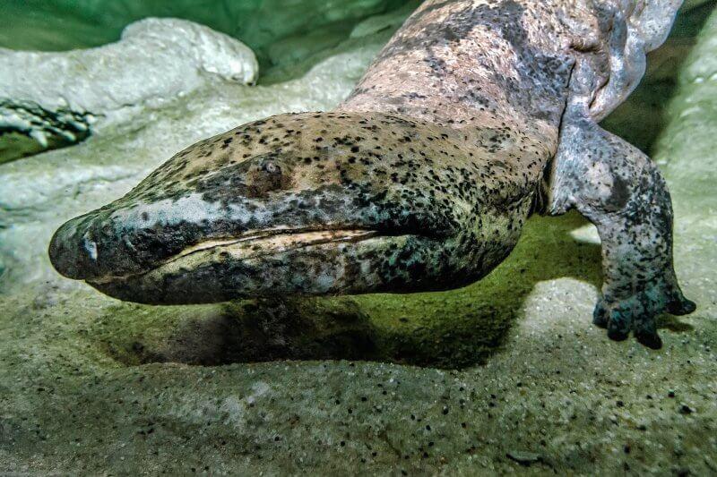 Саламандриум в зоопарке