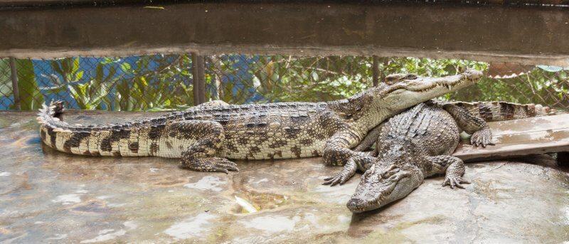 Крокодилы в зоопарке