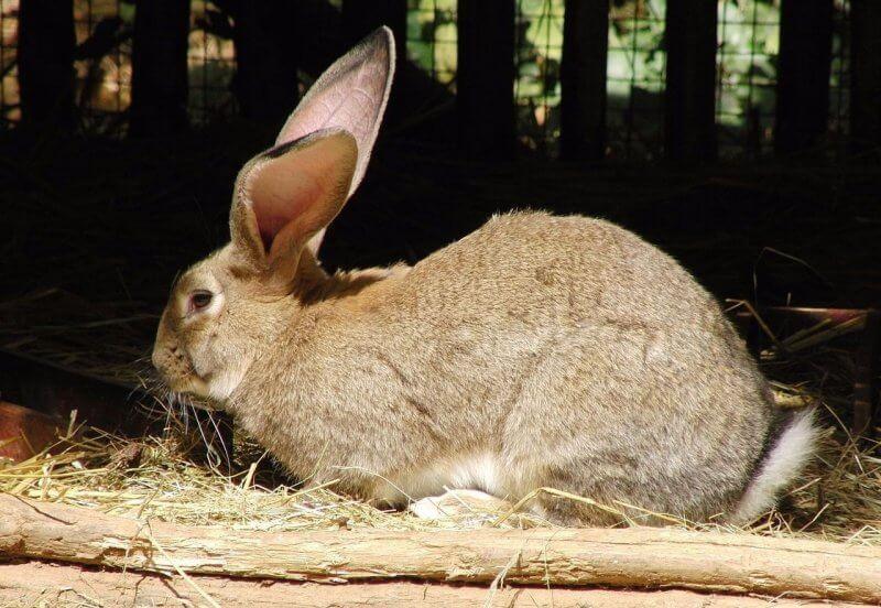 Кролики в Вольфсбурге