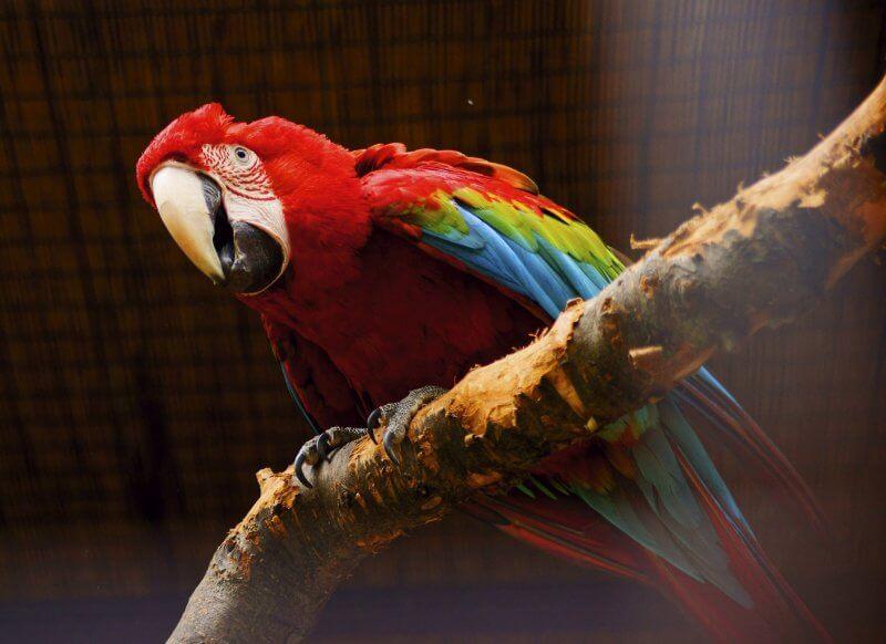 Попугай в зоопарке