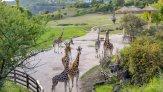 Зоопарк в Праге – что нужно знать перед посещением