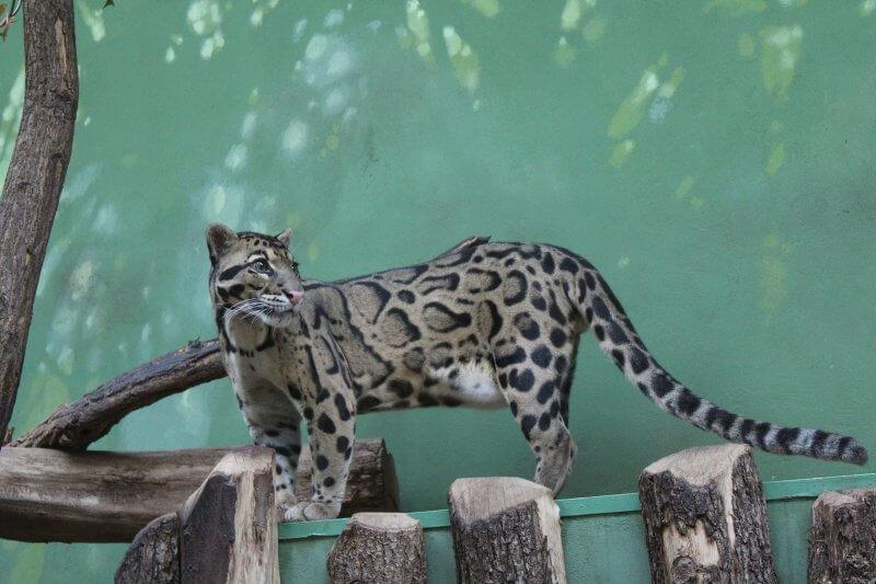 Животное в зоопарке